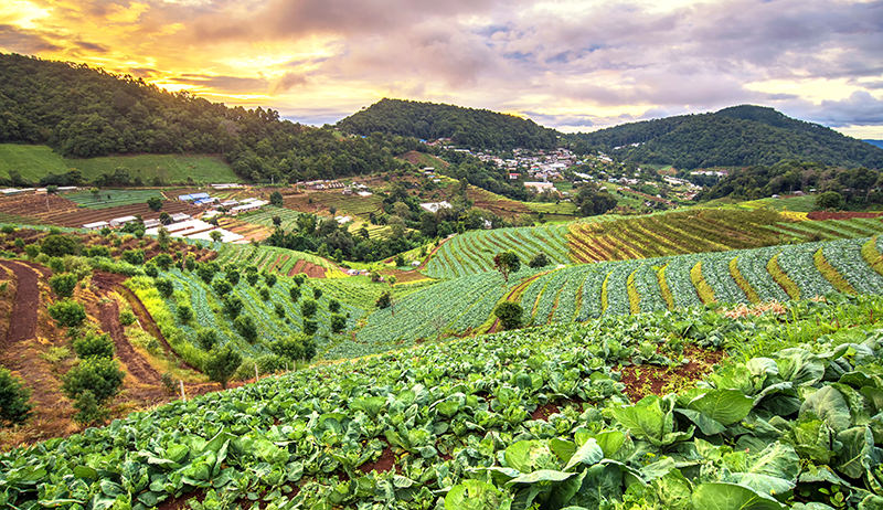 PSOJ CALLS FOR DEDICATED AGRICULTURE MINISTER